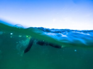 seasick when ocean swimming